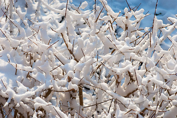 100306_DSC0062 Schnee Winter