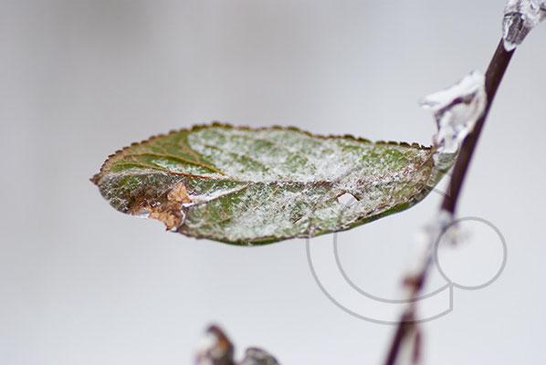 101219_DSC0147 Eis Winter