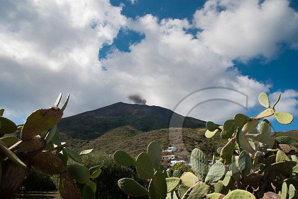 100912_0745 Kaktus Vulkan Stromboli Äolische Inseln