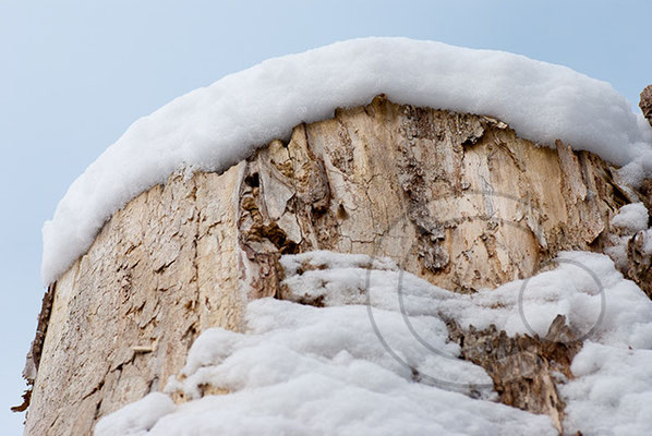 100214_DSC0038 Schnee Winter