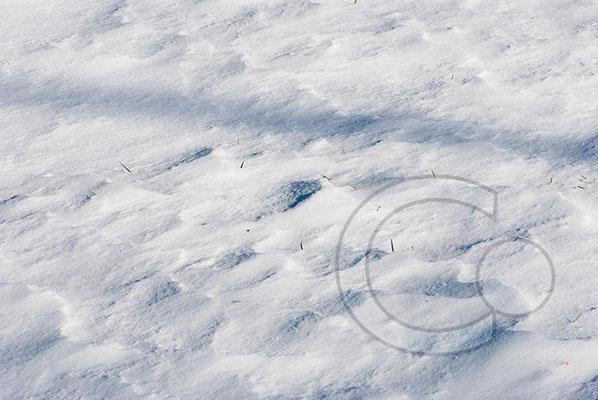 100306_DSC0096 Schnee Winter