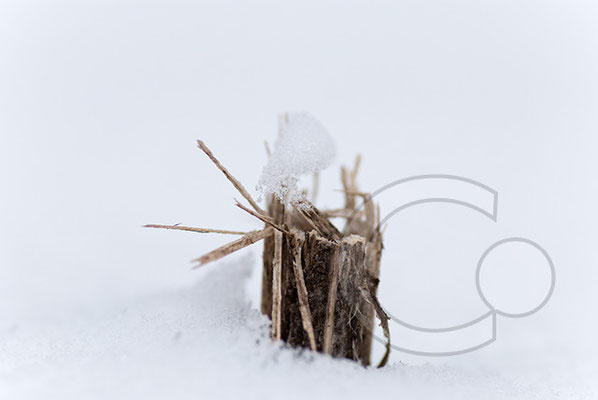100214_DSC0011 Schnee Winter
