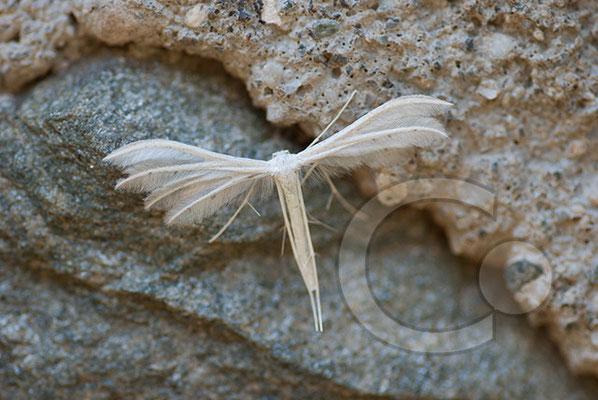 100704-071 Schmetterling Nachtfalter Tagfalter