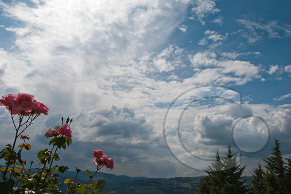 110601_DSC0597 Rose Himmel