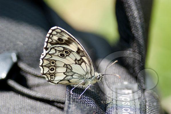 100712-131 Schmetterling Nachtfalter Tagfalter