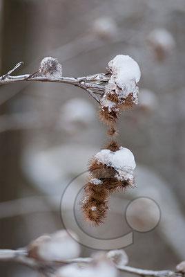 101219_DSC0189 Eis Winter