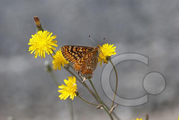 110525_DSC0100 Schmetterling