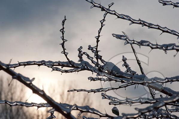 101219_DSC0157 Eis Winter