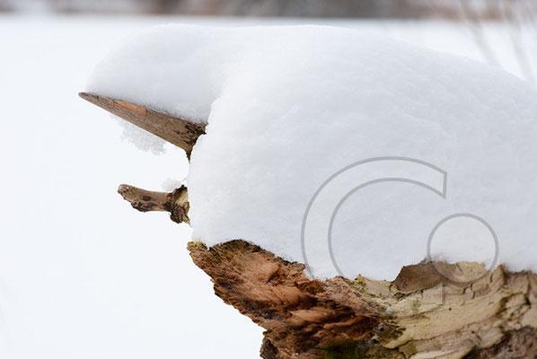 100214_DSC0037 Schnee Winter