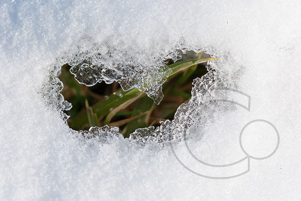 100306_DSC0112 Schnee Winter