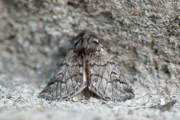 100712-084 Schmetterling Nachtfalter Tagfalter