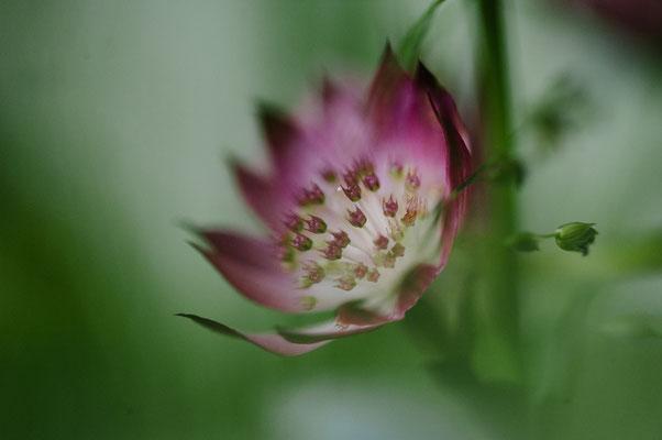 Eine Blume im der Frauenarztpraxis Dr. Eva Nast