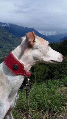 Windhundhalsband rot Leder Hund Handarbeit Bolleband
