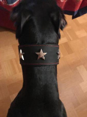 Halsband mit sternen Windhund schwarz Bolleband