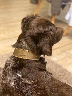 Jagdhundhalsband am Hund Leder Bolleband