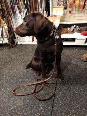 Labrador Lederhalsband Halsband Hund Leder Bolleband