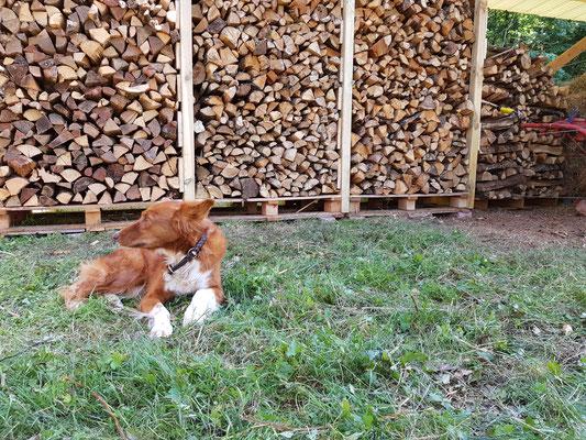 Der erste Unterstand ist fertig und das Holz kann gut durchtrocknen