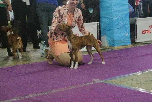 Angavu Maisha Dara Nyota