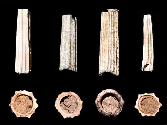 Dentalium sexangulum, Quattro Castella (RE), confronto tra sezioni di vari frammenti