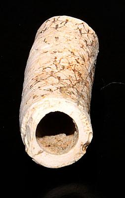 Frammento di Protula sp. da Quattro Castella (RE)