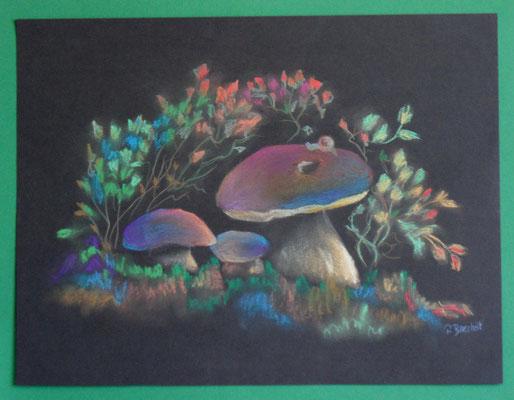 Pilze (Pastel Kreide) 45x34