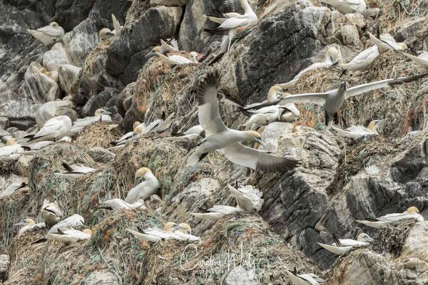 Vogelrots Runde