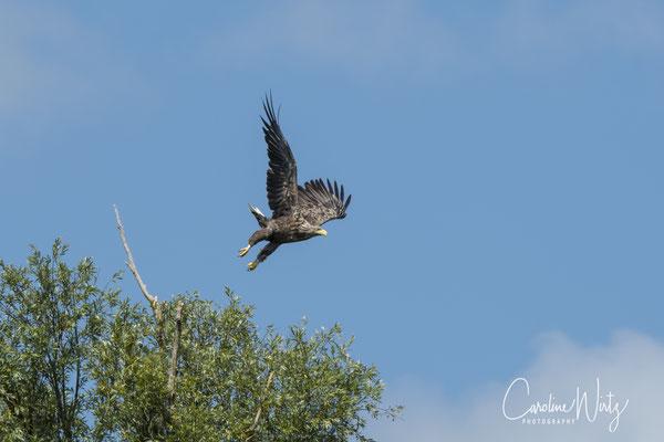 Wat een indrukwekkende roofvogel!