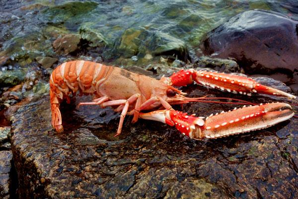 Produktentwicklung -  Fisch und Seafood