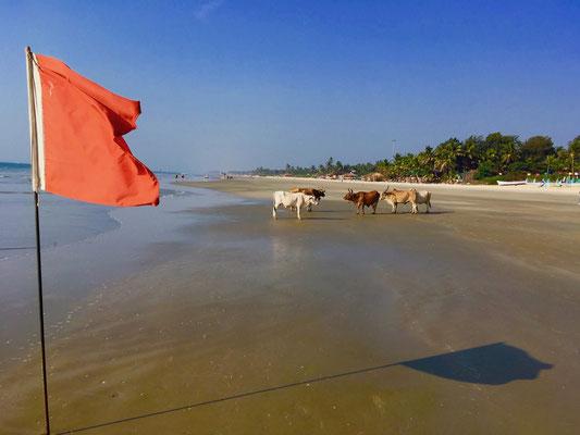 ... und dieser Strand ist unglaubliche 25 Kilometer lang