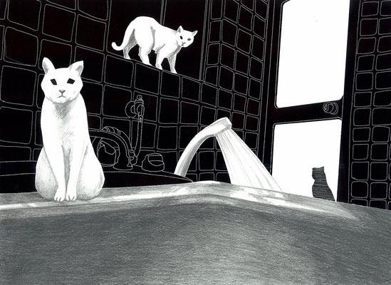 猫とシャワー  Copyright (c) ako sato. all right reserved.