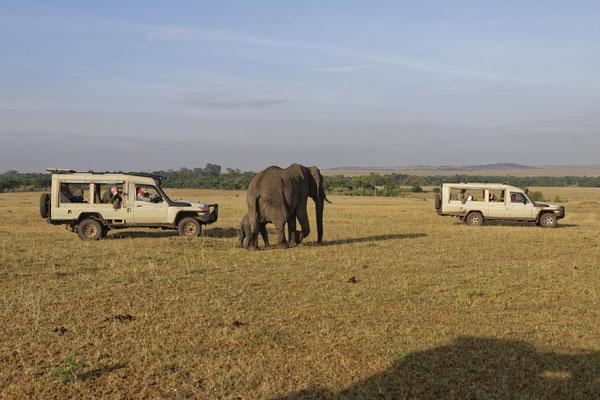 Fotosafari Momente meiner Workshops in der Masai Mara