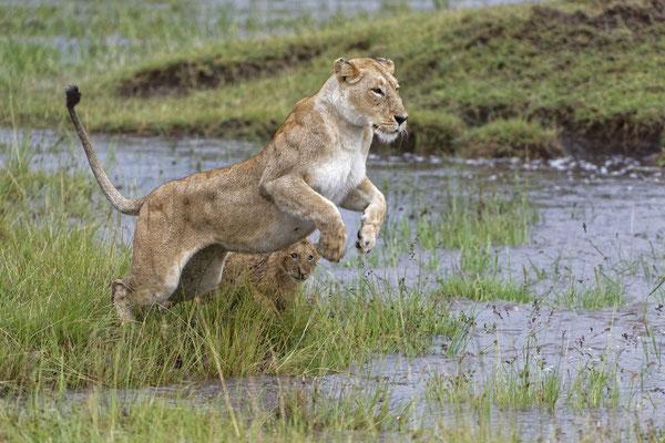 Auf Fotosafari in Kenia mit Uwe Skrzypczak