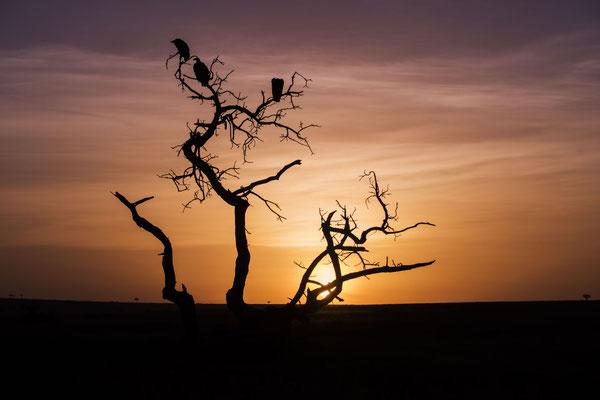 Ein abgestorbener Baum mit Geiern bei Sonnenaufgang