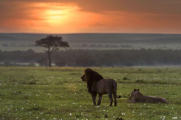 Lipstick mit Löwin und Baby vor dem wolkenverschleierten Sonnenaufgang