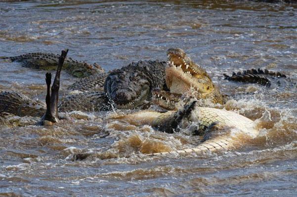 Krokodile bei Spiegel Online