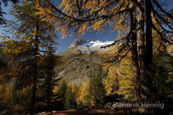 Herbst im Aletsch