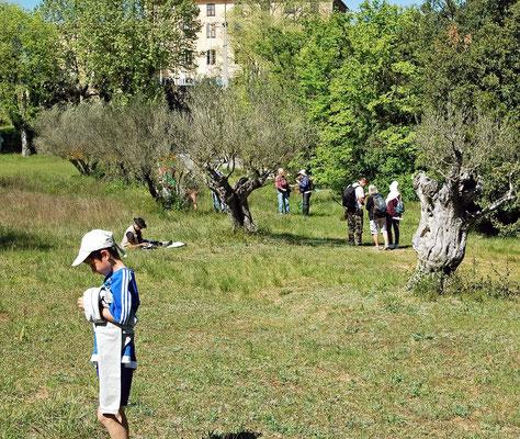 dans l'oliveraie de Sillans