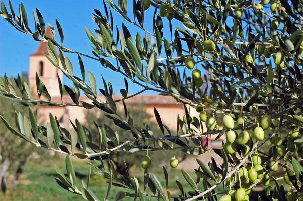 l'oliveraie communale