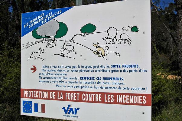 les brebis contribuent à l'entretien des terrains