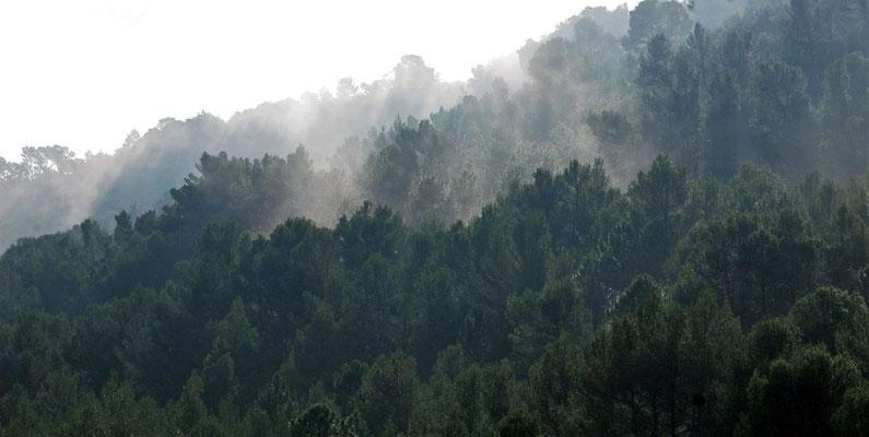 brume sur le vallon de la Bresque