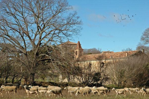 le pastoralisme partie intégrante du paysage