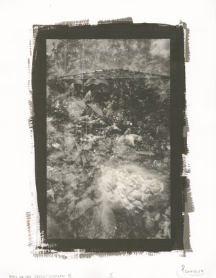 "May in the Secret Garden I, 14""x11"" gold-tone salt paper print,  The imagery is captured by a pinhole came"