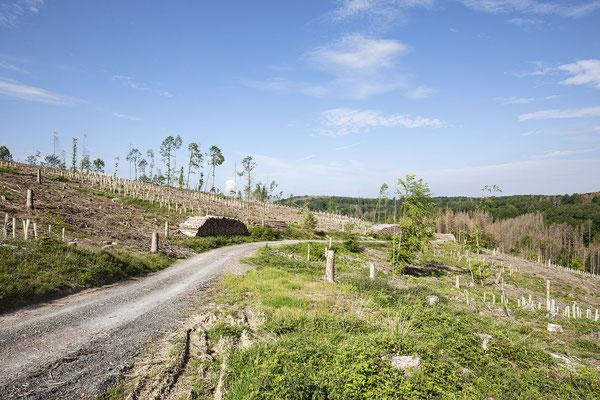 KwK-9 (umfangreiche, geschützte Neuanpflanzung, Wilhelmshöhe oberhalb Windeck-Wilberhofen, 2021)