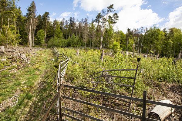 KwK-11 (partielle, geschützte Neuanpflanzung mit Naturaufwuchs, Wohmbachtal, 2021)
