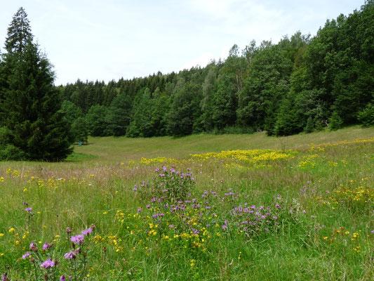 artenreiche Wiese (Foto: Kerstin Gründel)
