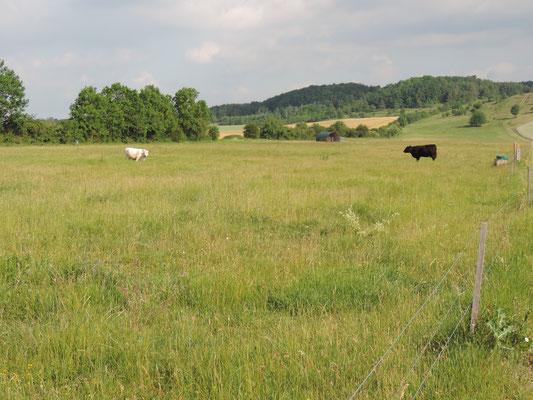 Extensive Weide (Foto: LPV)