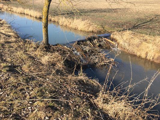 Damm Seidingstadt