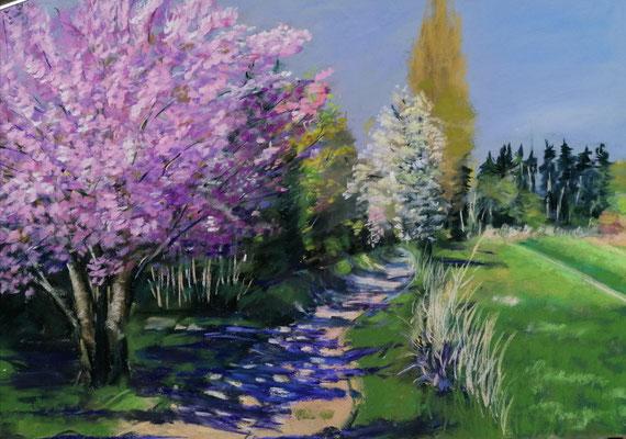Frühlingserwachen II 30 x 45 Pastell