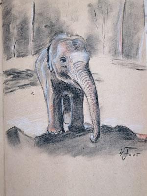 Elefantenkalb, Zoo La Palmyre, Kohle, Rötel.. Dessin a trois Crayons 24 x 30