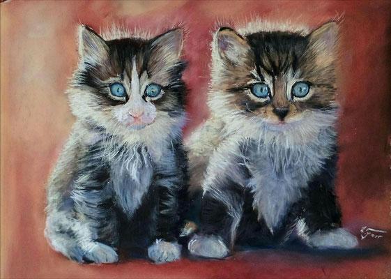 Katzenwelpen 30 x 40 Pastell